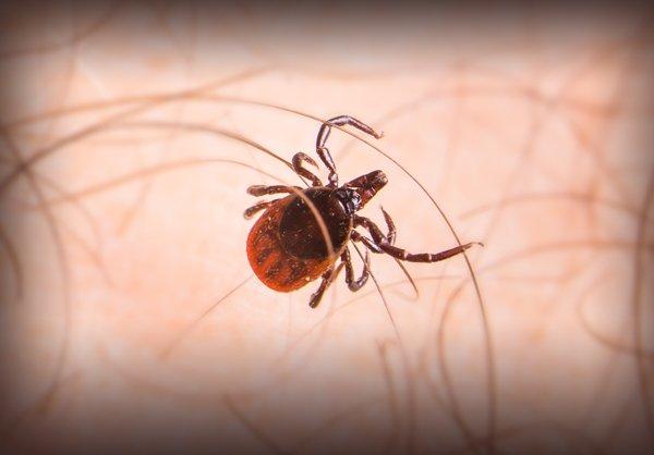 Tic Bug